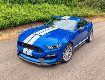 Traditional blue and white shelby